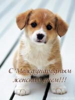 pozdrav-s-8-marta-3