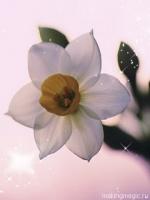 flower-26