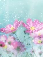 flower-32