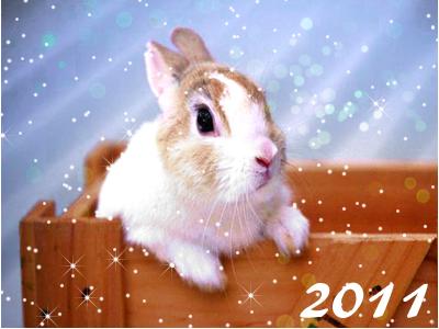 новый 2011 год кролика