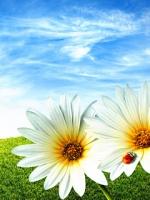 vesennie-cvety-1