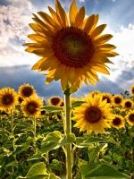 vesennie-cvety-13