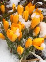 vesennie-cvety-18