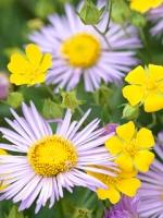 vesennie-cvety-4