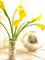 vesennie-cvety-7