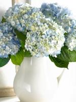 vesennie-cvety-8