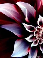 flower-11