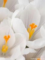 flower-33