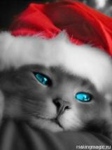 новогодняя картинка на телефон с котенком