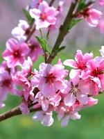 vesennie-cvety-12