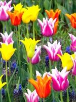 vesennie-cvety-15