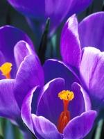 vesennie-cvety-16
