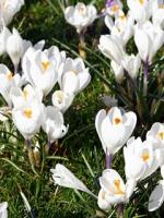 vesennie-cvety-17