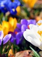 vesennie-cvety-19