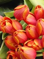 vesennie-cvety-3