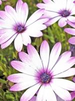 vesennie-cvety-5