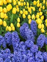 vesennie-cvety-9